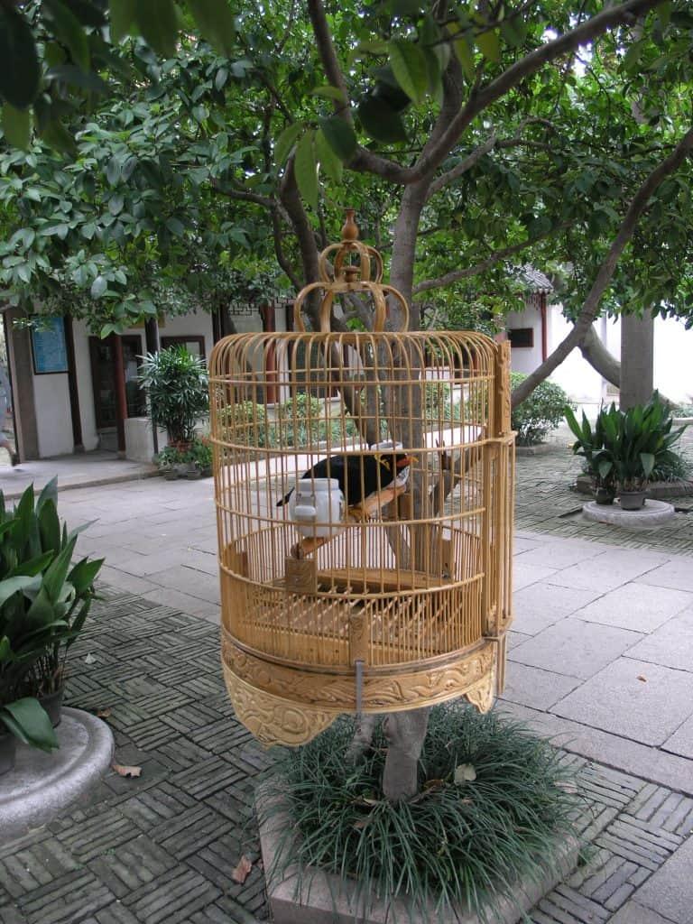 Master of Nets Garden